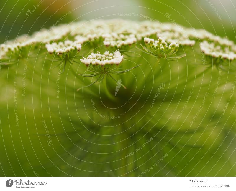 Nature Plant Summer Beautiful Green White Blossom Natural Esthetic Happiness Friendliness Positive