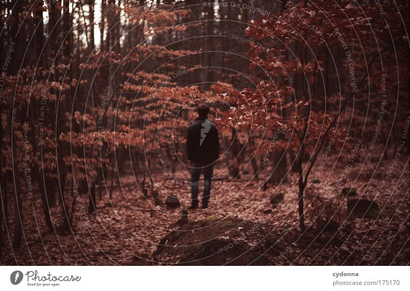 Human being Man Nature Tree Leaf Loneliness Calm Colour Adults Forest Autumn Life Environment Landscape Emotions Freedom