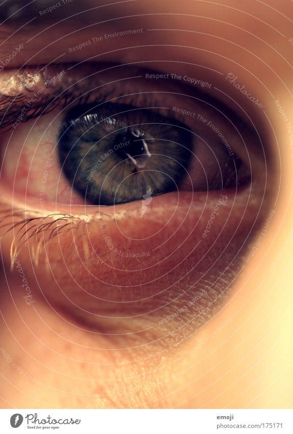 Eyes Masculine Pupil Iris
