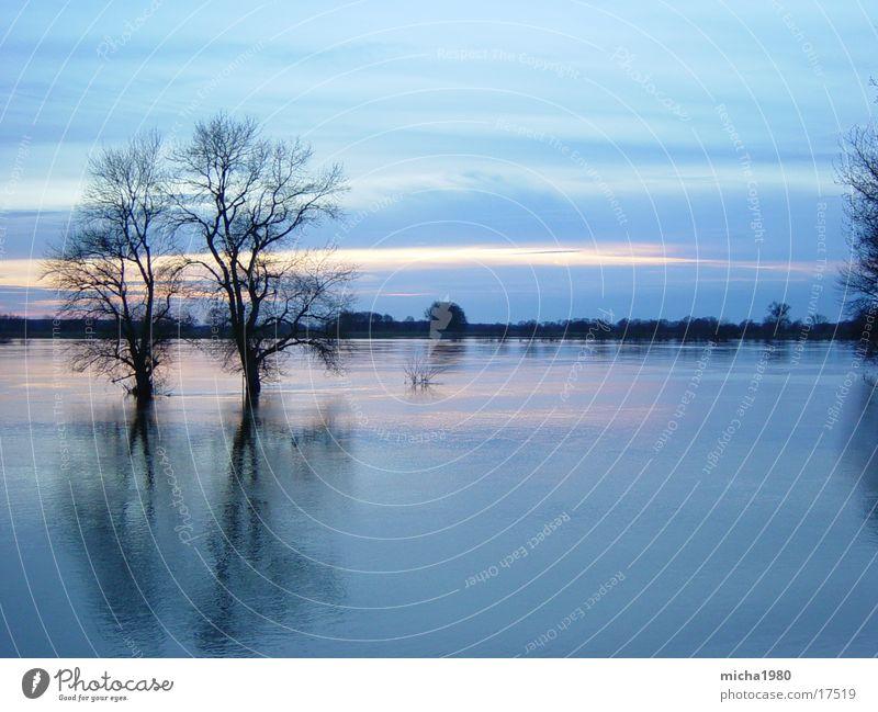 quiet flow Tree Elbe Water