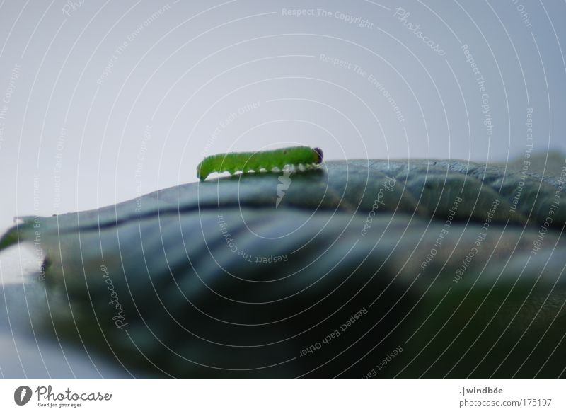 wave dance Colour photo Exterior shot Close-up Detail Deserted Day Central perspective Long shot Animal Wild animal Butterfly Worm Caterpillar 1 Crawl Walking