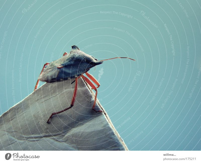Mountain climbing luck of a bug Bug Brave Wanderlust Fear Success Effort Safety Insect Vantage point Career Risk Point at the very top Surveillance Overview