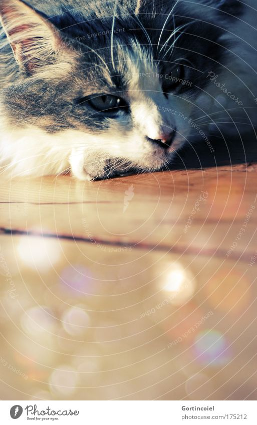 Beautiful Calm Eyes Animal Yellow Relaxation Emotions Cat Warmth Brown Gold Retro Ear Animal face Observe Mysterious
