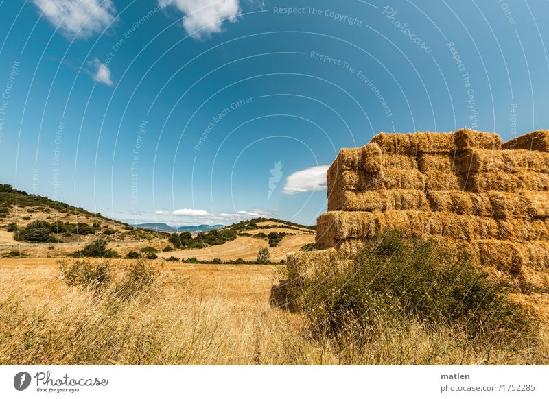 seasonal picture Landscape Sky Clouds Horizon Summer Weather Beautiful weather Plant Grass Agricultural crop Field Hill Blue Brown Yellow Green White Harvest