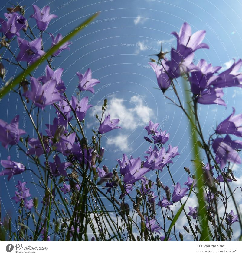 So, you were a flower child? Colour photo Exterior shot Deserted Sunlight Environment Nature Plant Flower Blossom Bluebell Blossoming Stand Growth Esthetic