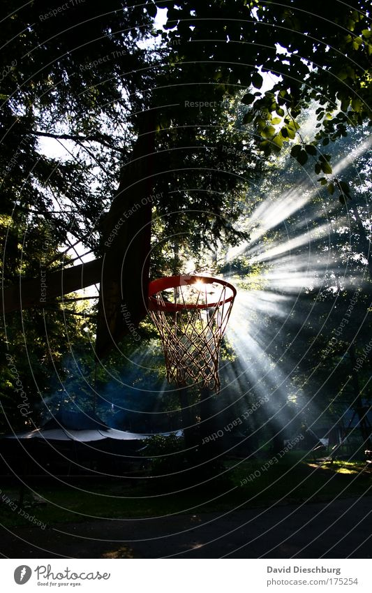 Perfect morning sports weather Colour photo Exterior shot Copy Space bottom Morning Dawn Day Light Shadow Contrast Silhouette Light (Natural Phenomenon)