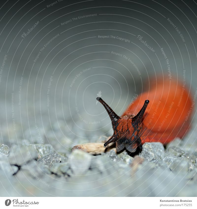 Nature Black Animal Eyes Gray Head Lanes & trails Stone Orange Glittering Speed Exceptional Disgust Snail Crawl Feeble