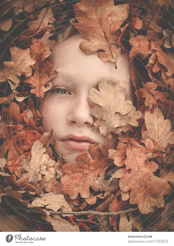 In autumn Thanksgiving Masculine Boy (child) Face 1 Human being Nature Plant Autumn Leaf Observe Looking Dream Warmth Protection Safety (feeling of) Climate