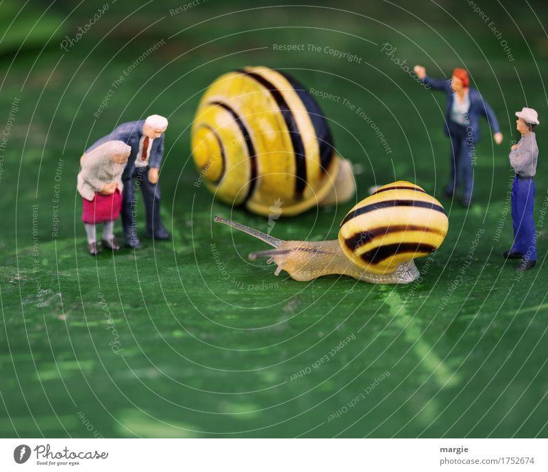 Miniwelten - Snails final spurt Meat Nutrition Human being Masculine Feminine Man Adults Grandfather Grandmother 4 Animal Wild animal 2 Yellow Green Patient