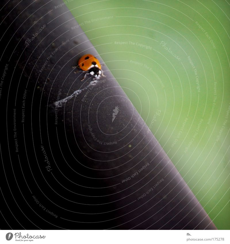 Green Black Animal Metal Drinking Ladybird Crawl Beetle