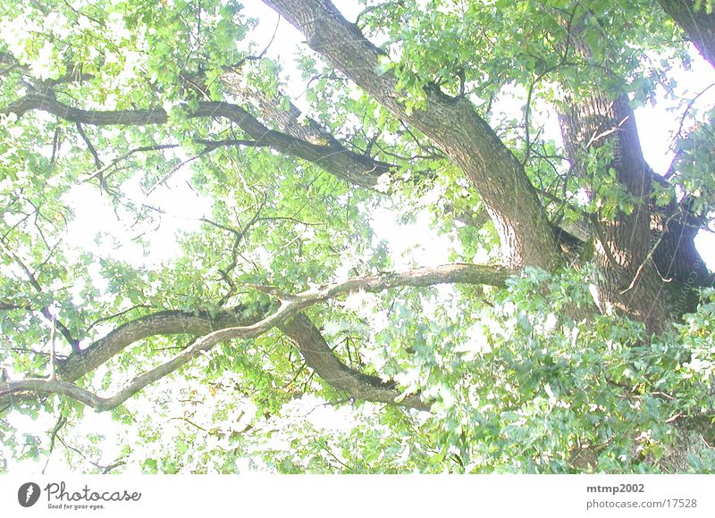 Tree Sun Summer Branch Reaction
