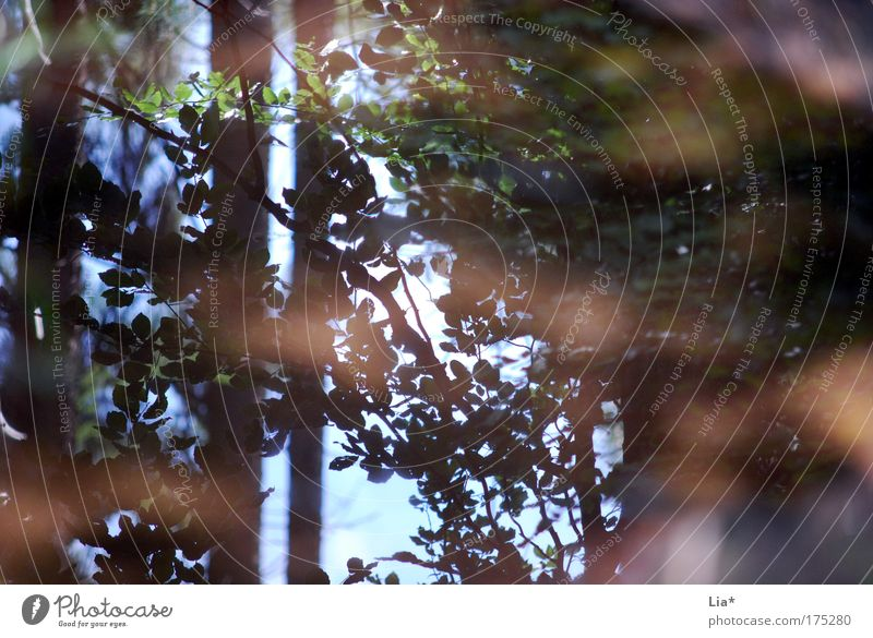 mirror Colour photo Exterior shot Reflection Environment Nature Plant Tree Environmental protection Puddle Mirror image Visual spectacle Leaf Forest