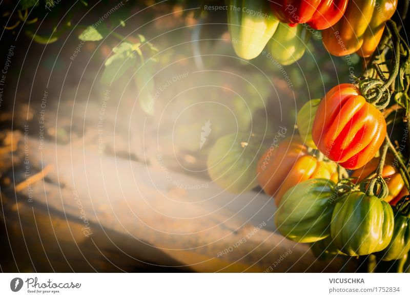 Nature Summer Healthy Eating Life Garden Food Design Vegetable Organic produce Harvest Tomato Vegetable bed