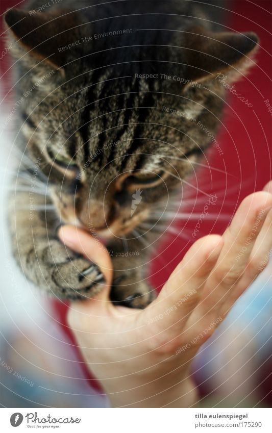 Cat Hand Red Animal Fingers Relationship To feed Pet Paw Human being Feeding