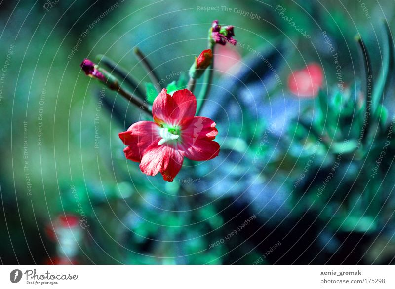 Nature Sun Flower Green Blue Plant Red Summer Life Blossom Grass Spring Feasts & Celebrations Pink Environment Bushes