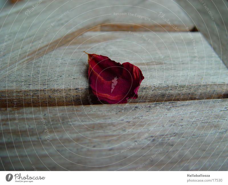 the last leaf Rose Leaf Death Like