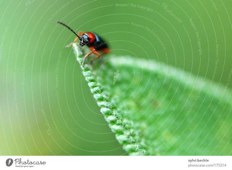 high up Nature Plant Animal Wild animal Beetle Observe Crawl Looking Small Green Red Black Colour photo Multicoloured Exterior shot Close-up