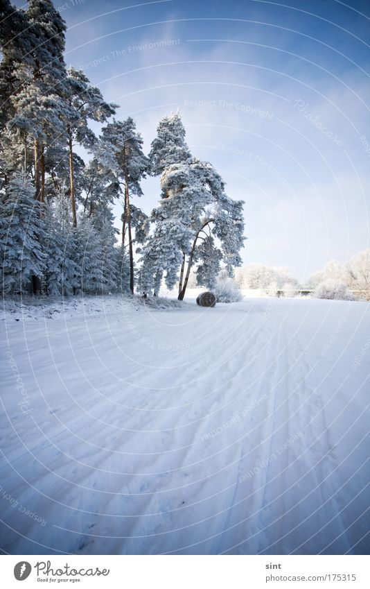 Nature Sky White Tree Blue Winter Calm Clouds Street Forest Cold Snow Relaxation Lanes & trails Landscape Ice