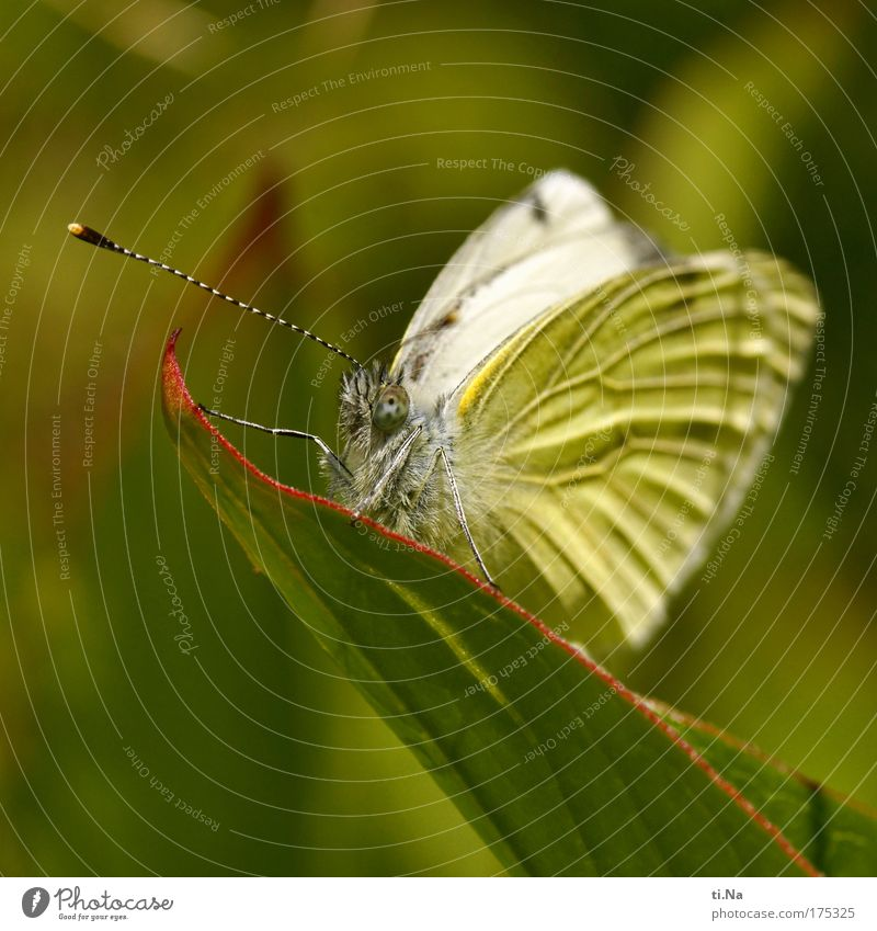 Nature White Green Plant Calm Leaf Animal Yellow Meadow Landscape Wait Environment Esthetic Wing Idyll Butterfly