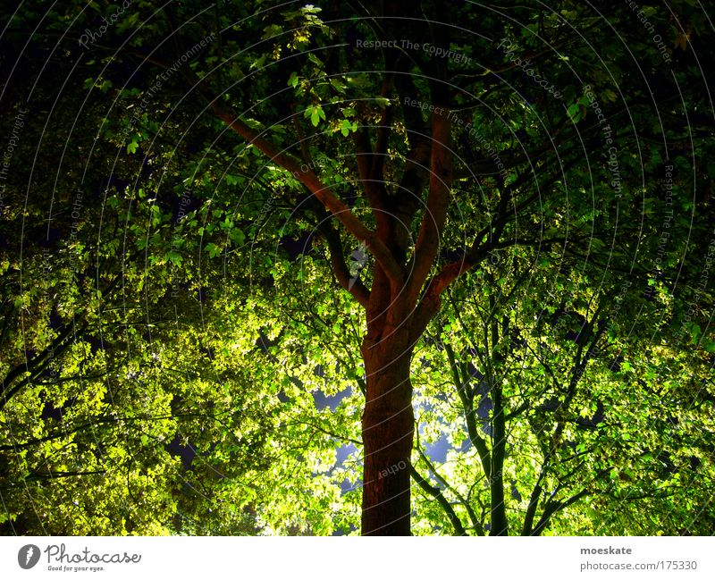 Nature Tree Green Summer Leaf Loneliness Animal Freedom Happy Park Landscape Contentment Moody Brown Environment Happiness