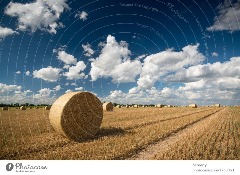 Rolls and clouds Nature Landscape Plant Earth Sky Clouds Summer Autumn Beautiful weather Field Village Round Blue Brown Yellow White Agriculture Tracks