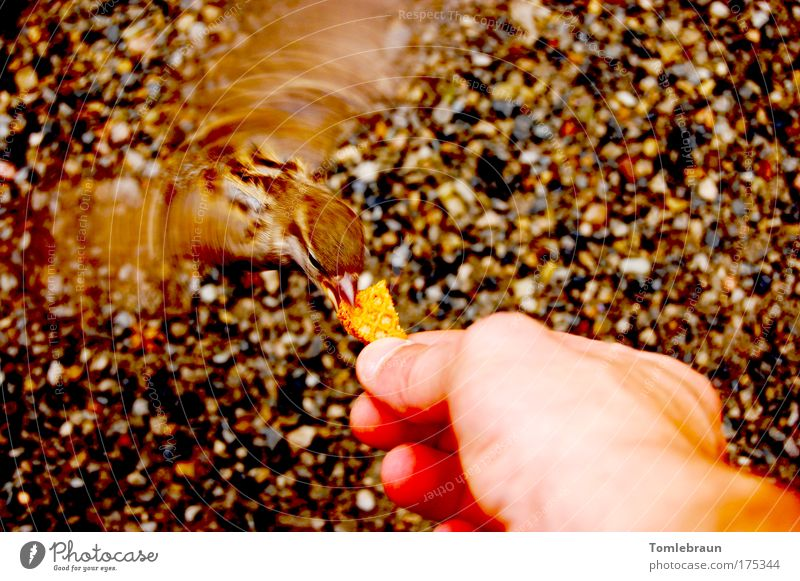 bird Colour photo Exterior shot Copy Space right Day Sunlight Motion blur Bird's-eye view Full-length Downward Wild animal Wing Feeding Near Smart Crazy