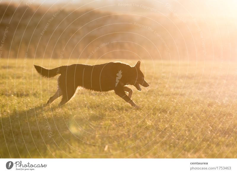 Dog Nature Landscape Animal Environment Warmth Meadow Movement Sports Happy Field Joie de vivre (Vitality) Adventure Pelt Running Brave