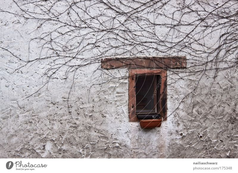 Old Plant House (Residential Structure) Loneliness Dark Wall (building) Window Gray Sadness Wall (barrier) Brown Facade Transience Village Stagnating Sharp-edged