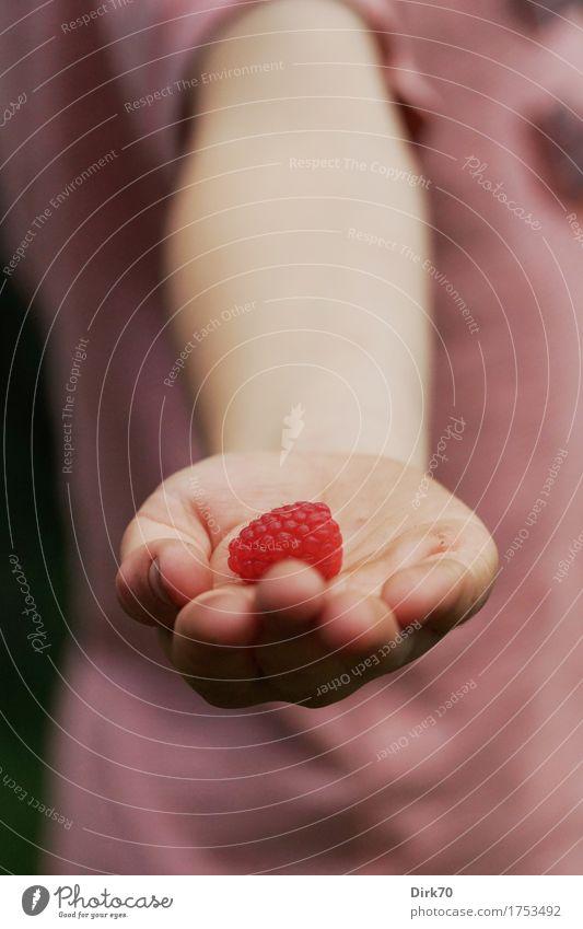 Human being Child Nature Summer Hand Red Natural Healthy Boy (child) Happy Garden Friendship Fruit Fresh Nutrition Infancy
