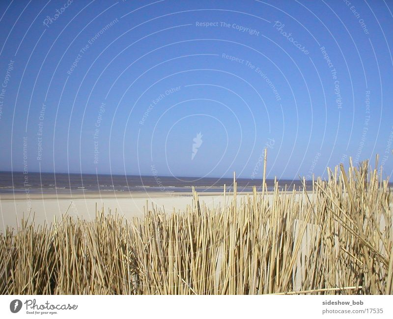 texel_01 Beach Common Reed Ocean Netherlands Beautiful weather Beach dune Texel Horizon Deserted Copy Space top Exterior shot Colour photo
