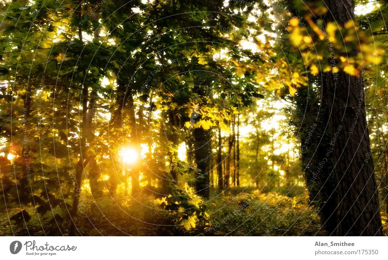Nature Beautiful Tree Green Plant Yellow Forest Autumn Landscape Moody Germany Gold Warm-heartedness Idyll Back-light Sunrise