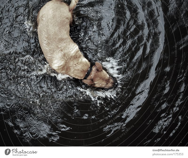 Dog Water Joy Animal Black Cold Playing Gray Brown Swimming & Bathing Waves Power Wild Energy Wet Dangerous