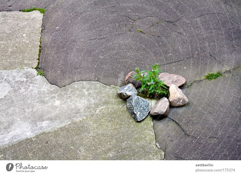 Plant Summer Stone Building Concrete Asphalt Idyll Gas Hollow Terrace Crack & Rip & Tear Backyard Horticulture Oxygen Foliage plant Chemistry