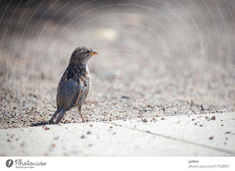 Nature Landscape Animal Bird Sand Earth Wild animal Success Observe Terrace Audience Fame