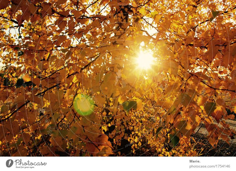 Nature Vacation & Travel Sun Tree Landscape Relaxation Leaf Joy Far-off places Forest Yellow Autumn Think Freedom Orange Contentment