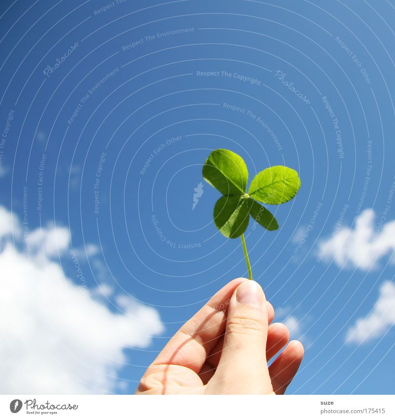 lucky charm Happy Hand Fingers Environment Nature Sky Clouds Plant Clover Cloverleaf Sign To hold on Happiness Blue Green Anticipation Success Lottery