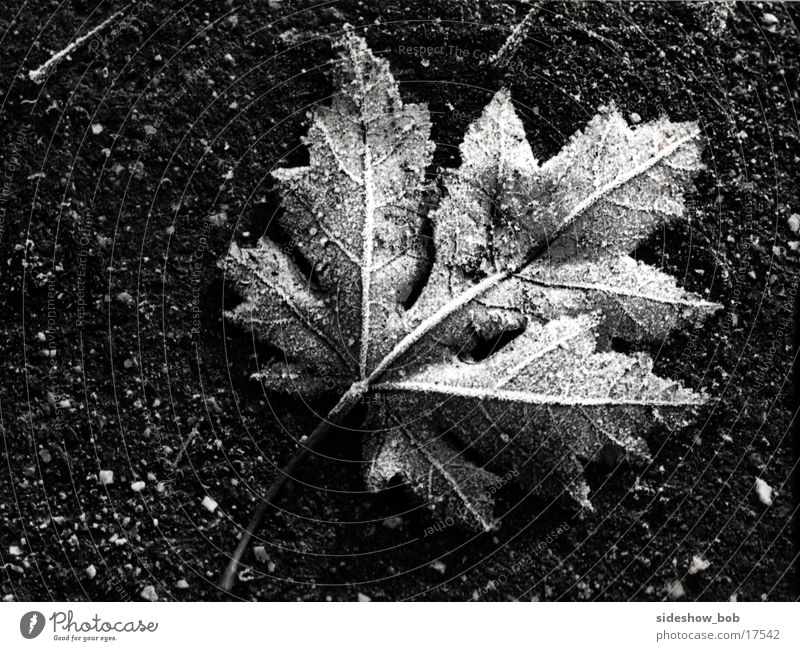 leaf Leaf Autumn Tree