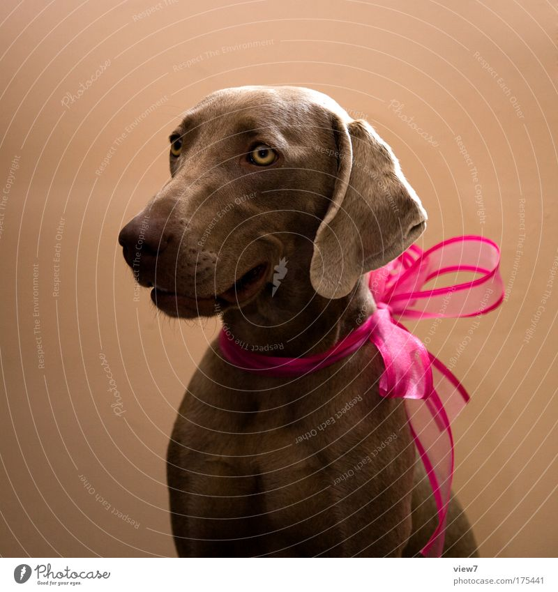 Joy Animal Happy Dog Moody Feasts & Celebrations Pink Elegant Success Esthetic Happiness Good Animal face Kitsch Plastic String