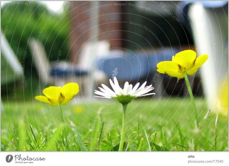 Meadow of summer Flower Blur Nature macro mode Contrast