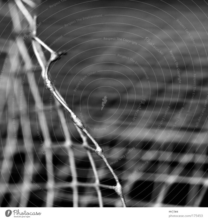 the silence of the grid. Black & white photo Subdued colour Exterior shot Close-up Detail Macro (Extreme close-up) Pattern Structures and shapes Deserted
