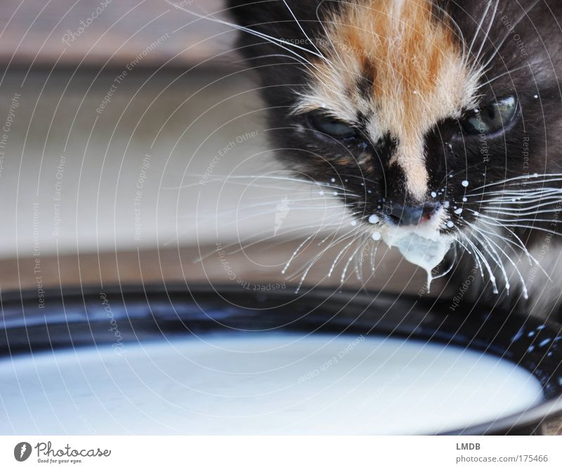 Pepper and Milk Colour photo Exterior shot Detail Copy Space left Copy Space bottom Neutral Background Animal portrait Looking into the camera Forward Plate