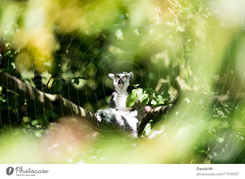 What are you looking at? Nature Sun Summer Beautiful weather Plant Forest Virgin forest Animal Farm animal Wild animal Animal face Pelt Zoo 1 Observe Sit Eyes