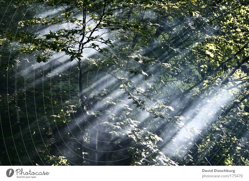 Power of light Colour photo Exterior shot Structures and shapes Morning Dawn Day Light Shadow Contrast Sunlight Sunbeam Nature Landscape Plant Air Spring Summer