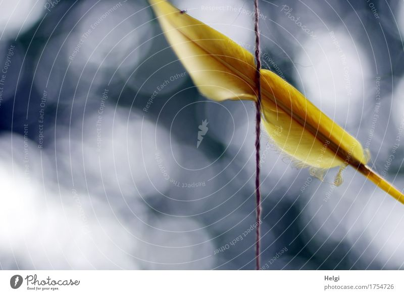 catch the dream... String Feather Hang Exceptional Simple Beautiful Uniqueness Blue Yellow Gray White Dream Creativity Dreamcatcher Point of light Colour photo