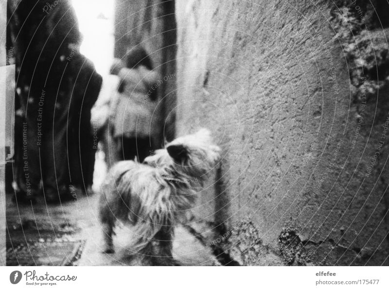 street dog Dog Black & white photo Lomography Wauwau Barcelona Town Street Human being Pedestrian Old town Ancient Gloomy Colorless Pelt Snout Paw Head Legs