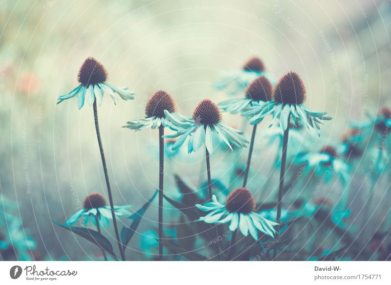 Flowers mystical Art Work of art Painting and drawing (object) Environment Nature Landscape Plant Spring Summer Autumn Climate change Beautiful weather
