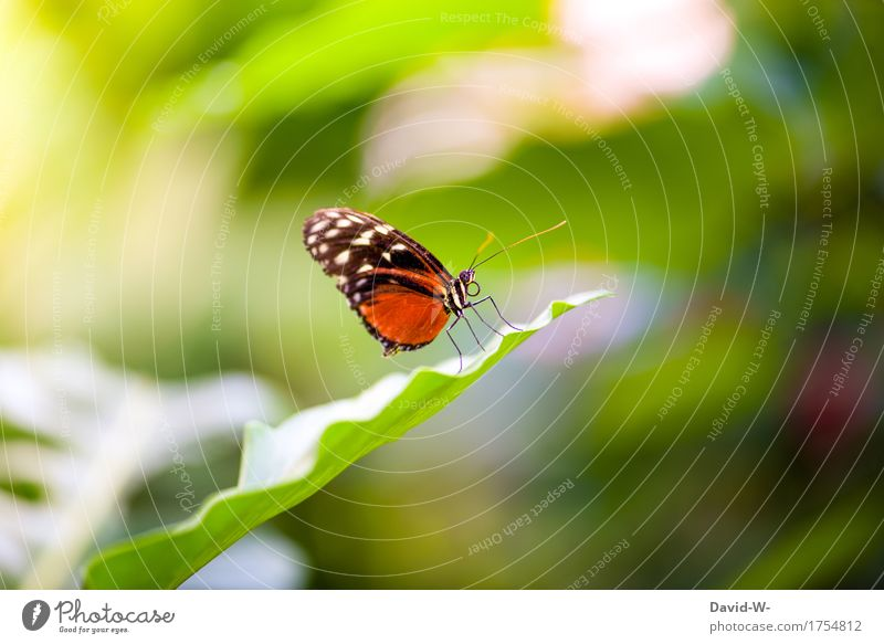 proboscidean Environment Nature Sun Sunlight Spring Summer Climate Beautiful weather Plant Bushes Leaf Park Animal Farm animal Butterfly Wing 1 Observe