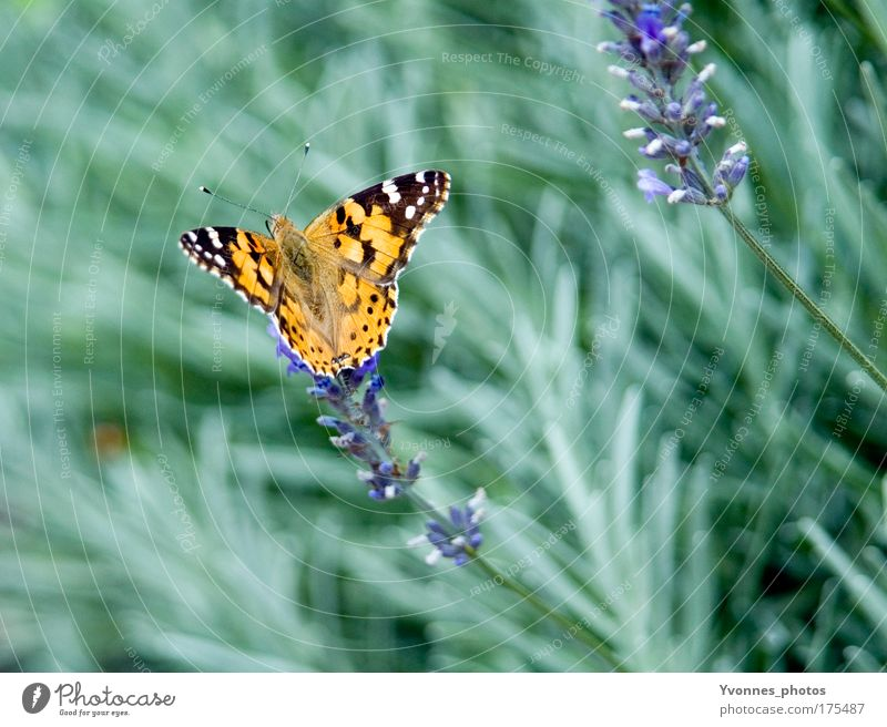 butterfly Colour photo Multicoloured Exterior shot Close-up Detail Macro (Extreme close-up) Day Animal portrait Summer Garden Environment Nature Plant Earth