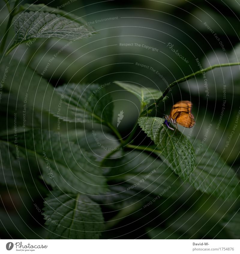 A touch of orange Environment Nature Landscape Plant Animal Spring Summer Climate change Leaf Blossom Foliage plant Exotic Butterfly Wing Zoo 1 To feed Drinking