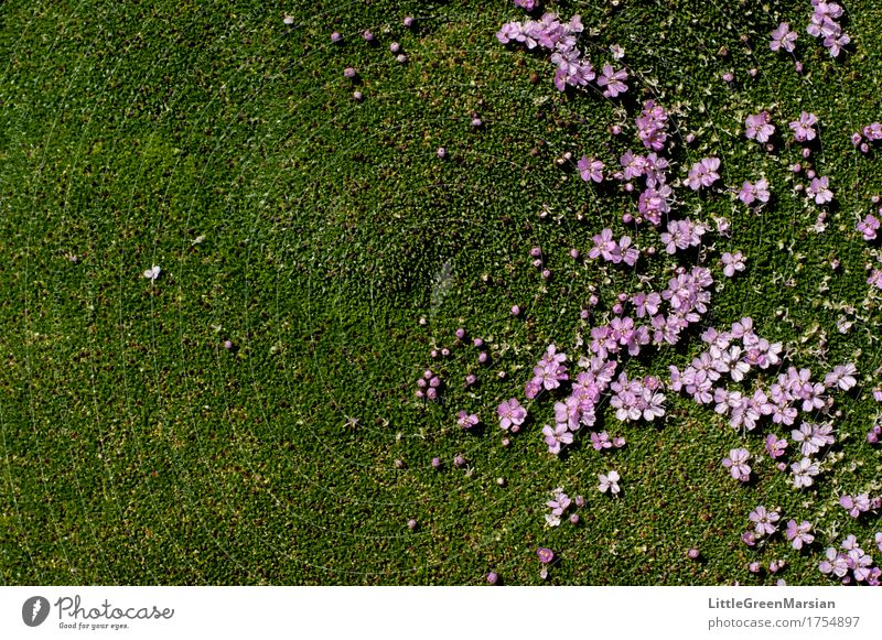 Flowerbed [3] Nature Plant Beautiful Blossom Garden Park Earth Esthetic Wet Soft Ground Firm Moss Wild plant Wetlands Ground cover plant